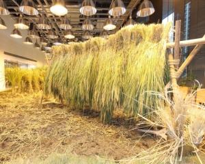 09-urban-farm