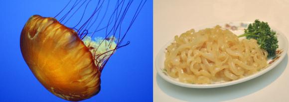 2013-11-17-jellyfish