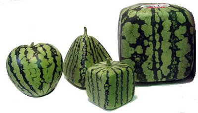 molded_watermelons
