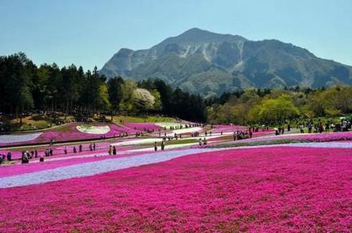 Chichibu Hitsujiyama Park em Saitama 3