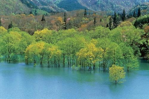 Lago Miyama Aomori