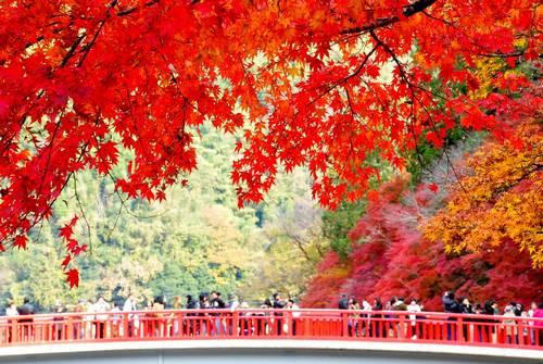 Outono no Japão - Korankei - Aichi 2