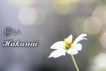 Hakanai (1)