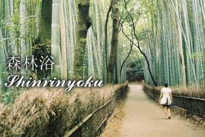 Shinrinyoku 1